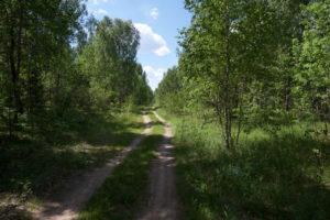 Weissrussland, Belarussia, Waldgebiet, Habitat, bei Minsk, CC-BY-SA-4.0, Martin Albrecht, Bolligen, Switzerland