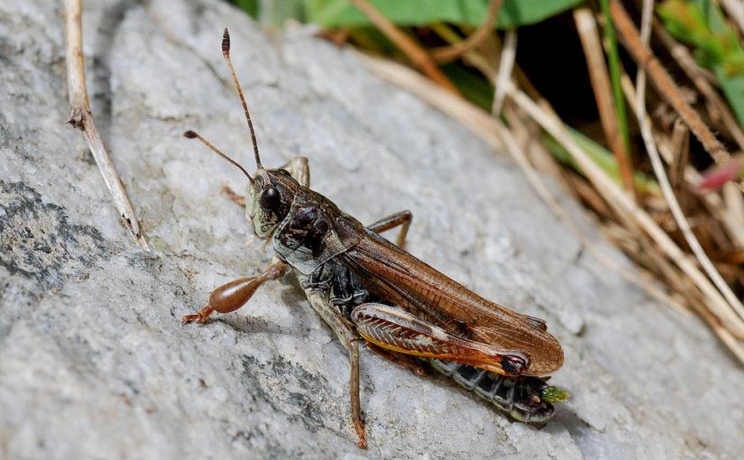 Sommerexkursion zu den alpinen Insekten