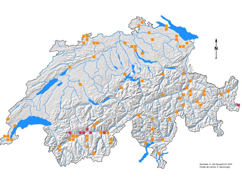 Verbreitungskarte der Grauen Moderholzeule
