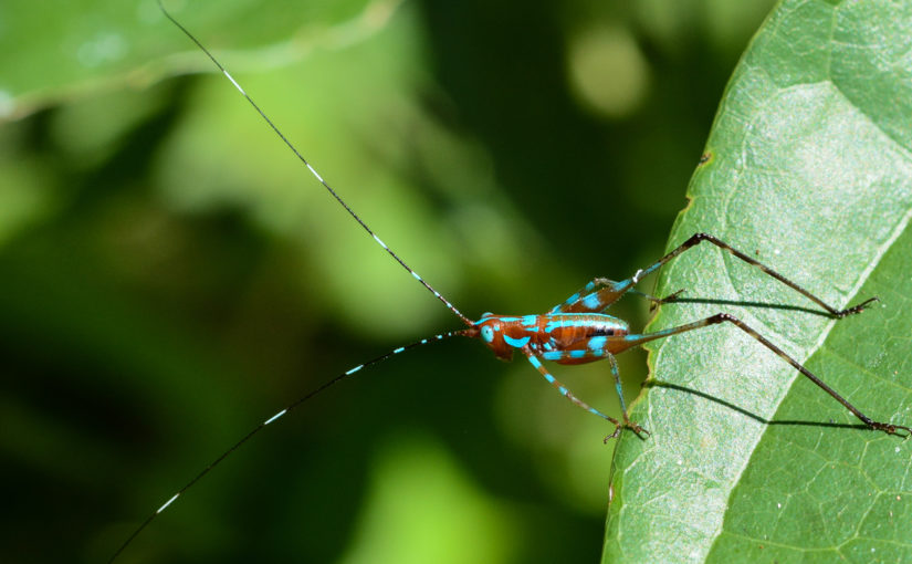 Manu Nationalpark in Peru – Hotspot der Biodiversität