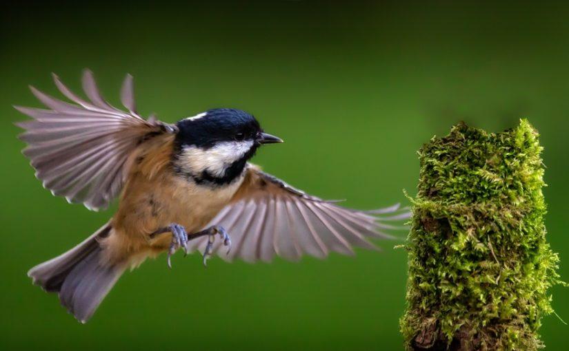 Petition zur Erforschung des Insektensterbens