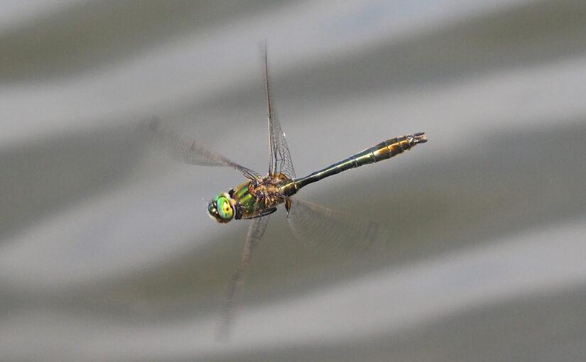 """<span style=""""color: #ff0000;"""">[ABGESAGT]</span> Libellen – wie die Juwelen der Lüfte fliegen, jagen und sehen"""