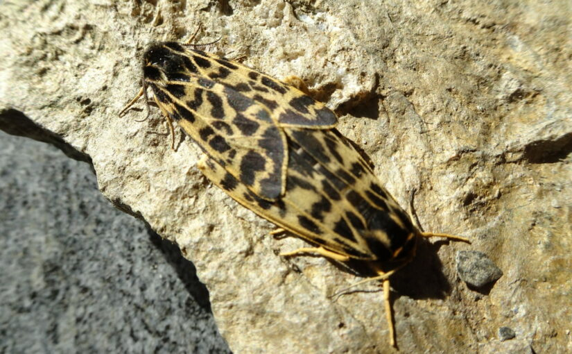 Schmetterlings- und Gletscher-«Mekka» Zermatt