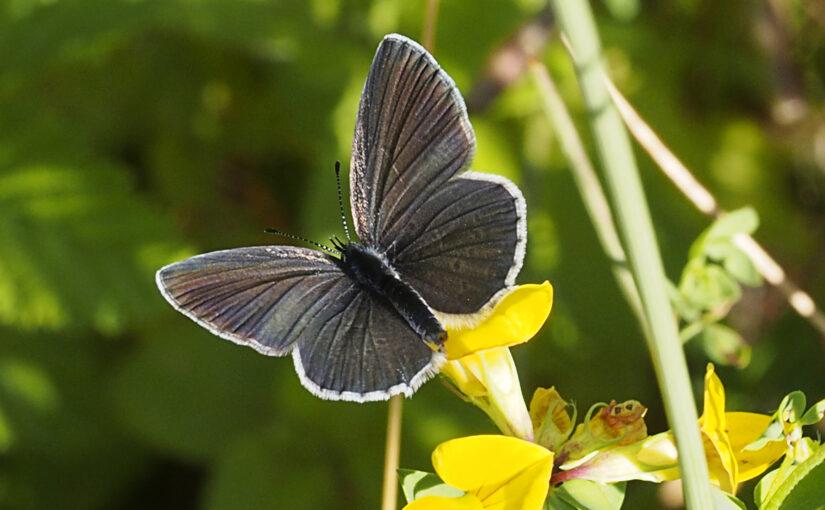 Insektensterben – Sind wir dem Untergang geweiht?