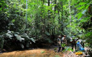 Forschung auf Borneo CC BY-SA 4.0 Stefan Hertwig NMBE Switzerland